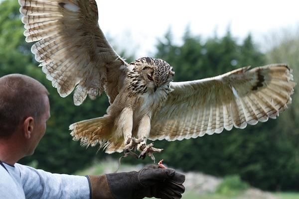 Turbary Woods Owl Sanctuary